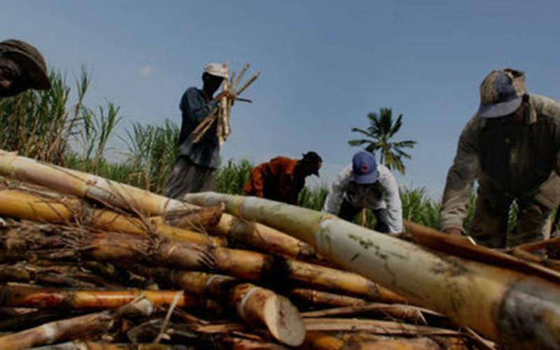 Federación de Cañicultores solicitó al Gobierno detener importaciones de azúcar